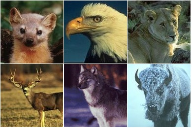 US Fish and Wildlife Service Icons