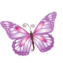 Butterfly purple icon