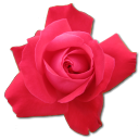 Rose Cerise icon
