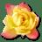 Rose-Yellow-2 icon