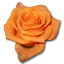Rose orange 2 icon