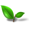 Tea-plant-leaf icon