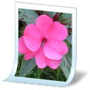 Document picture png icon