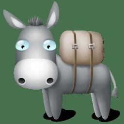 A Lovely Donkey