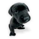 Puppy 2 icon