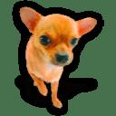 Puppy 3 icon