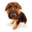 Puppy-6 icon