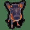 Puppy-8 icon